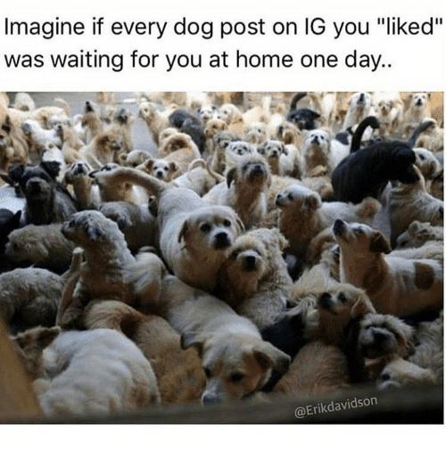 "Memes, Home, and Waiting...: Imagine if every dog post on IG you ""liked""  was waiting for you at home one day..  @Erikdavidson"