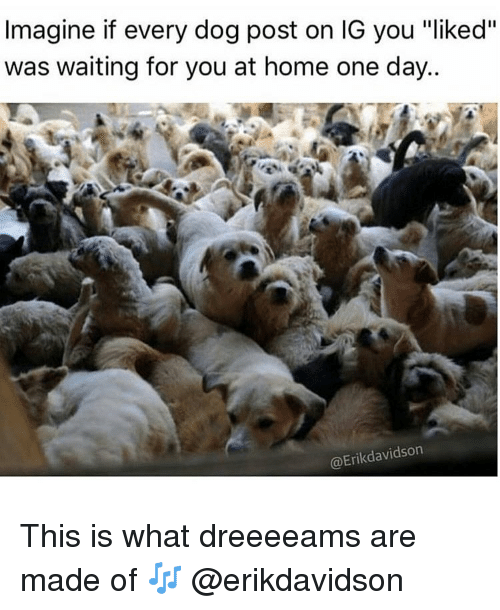 "Home, Girl Memes, and Waiting...: Imagine if every dog post on IG you liked""  was waiting for you at home one day..  @Erikdavidson This is what dreeeeams are made of 🎶 @erikdavidson"