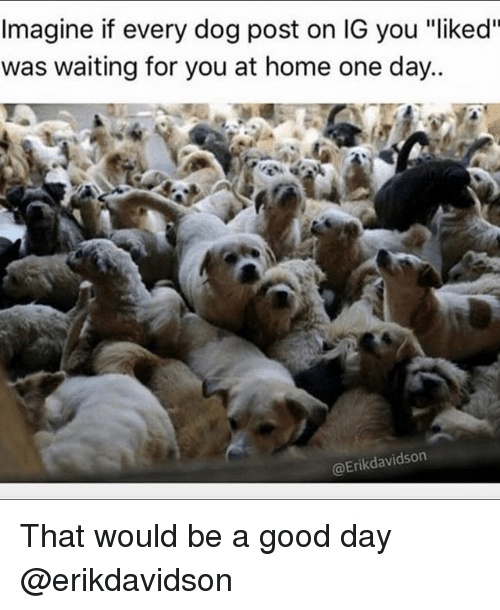 """Good, Home, and Girl Memes: Imagine if every dog post on IG you """"liked""""  was waiting for you at home one day..  @Erikdavidson That would be a good day @erikdavidson"""