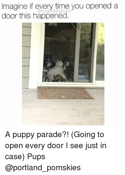 Memes, Puppy, and Time: Imagine if every time you opened a  door this happened  @dogsbeingbasi A puppy parade?! (Going to open every door I see just in case) Pups @portland_pomskies