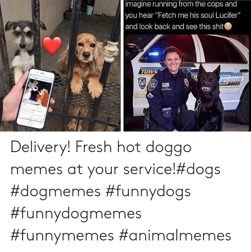 "Dogs, Fresh, and Memes: imagine running from the cops and  you hear ""Fetch me his soul Lucifer""  and look back and see this shit  TOWN Delivery! Fresh hot doggo memes at your service!#dogs #dogmemes #funnydogs #funnydogmemes #funnymemes #animalmemes"