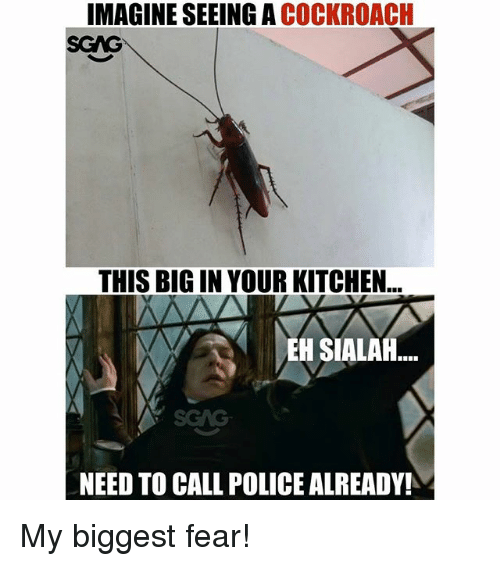 Memes, Police, and Fear: IMAGINE SEEING A COCKROACH  SGAG  THIS BIG IN YOUR KITCHEN  EH SIALAH  SGAG  NEED TO CALL POLICE ALREADY! My biggest fear!