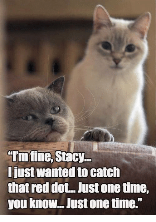 """Grumpy Cat, Reds, and Red: """"Imfine, Stacy  Just Wanted to catch  that red dot. Just onetime,  you know.. Just onetime."""