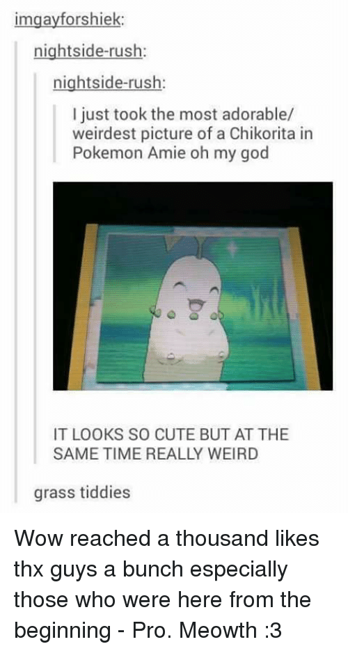 Cute, God, and Memes: imgayforshiek:  nightside-rush  nightside-rush.  I just took the most adorable/  weirdest picture of a Chikorita in  Pokemon Amie oh my god  IT LOOKS SO CUTE BUT ATTHE  SAME TIME REALLY WEIRD  grass tiddies Wow reached a thousand likes thx guys a bunch especially those who were here from the beginning - Pro. Meowth :3