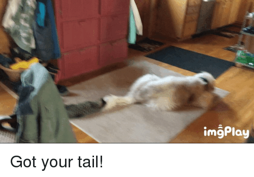Funny, Got, and Tail: imgPlay Got your tail!