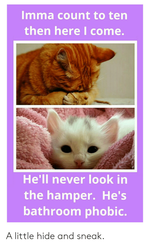 Hell, Never, and LOLcats: Imma count to ten  then here I come.  He'll never look in  the hamper. He's  bathroom phobic. A little hide and sneak.