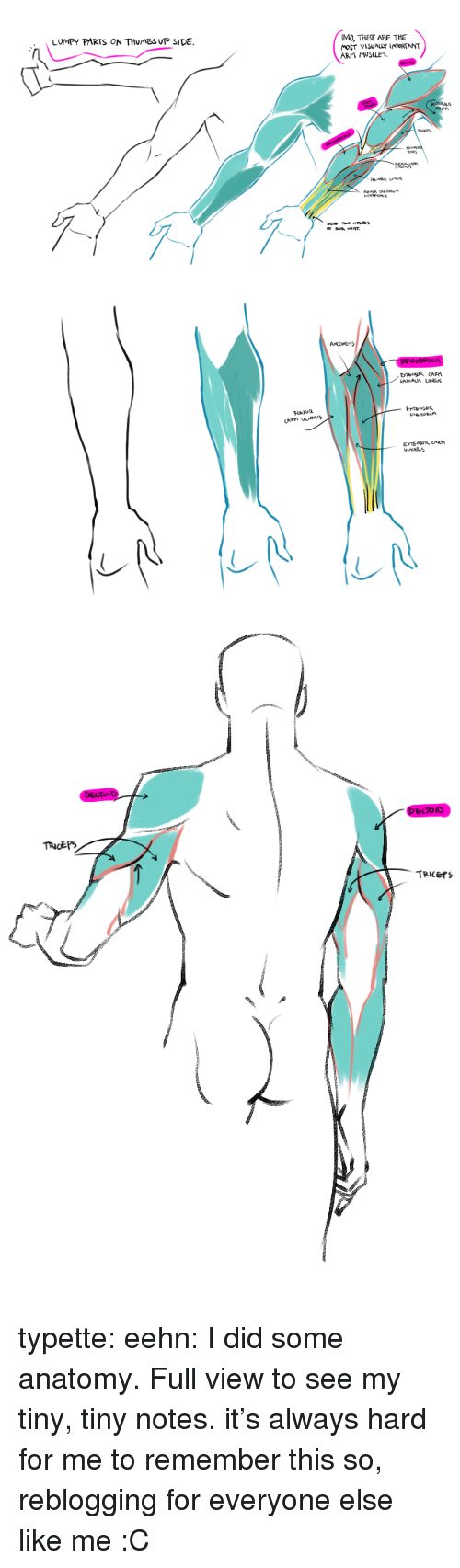 Target, Tumblr, and Blog: IMO, THESE ARE THE  MOST VISUALY IMPORTANT  ARM MUSCLES.  LUMPY PARTS ON THUMBS UP SIDE.  TRICEPS  PR  ENES   RADIAUS LoNCus  CARPI ULNARIS   TRiCErS typette: eehn:  I did some anatomy. Full view to see my tiny, tiny notes.  it's always hard for me to remember this so, reblogging for everyone else like me :C
