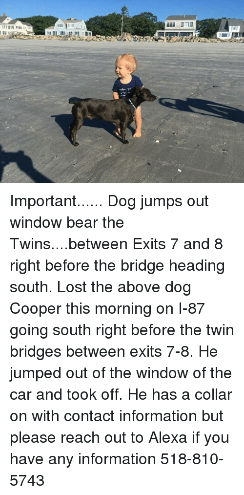 Memes, Lost, and Twins: Important...... Dog jumps out window bear the Twins....between Exits 7 and 8 right before the bridge heading south.  Lost the above dog Cooper this morning on I-87 going south right before the twin bridges between exits 7-8. He jumped out of the window of the car and took off.  He has a collar on with contact information but please reach out to Alexa if you have any information 518-810-5743