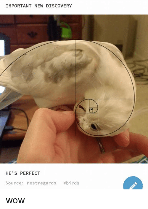 Wow, Birds, and Source: IMPORTANT NEW DISCOVERY  HE'S PERFECT  Source : nestregards wow