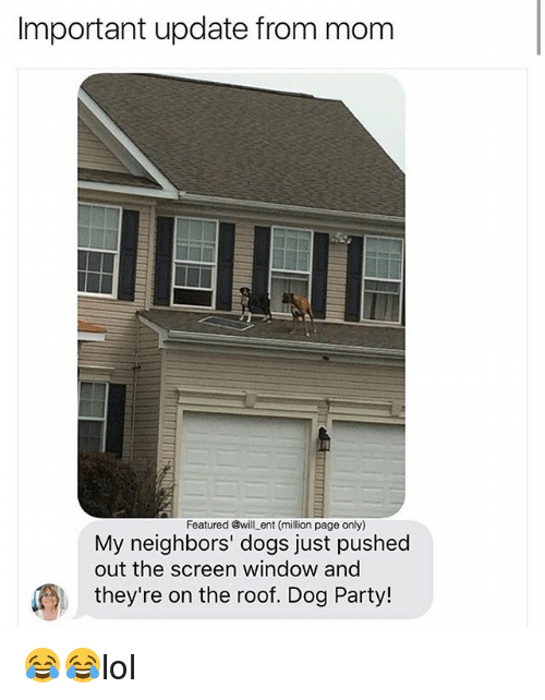 Dogs, Memes, and Party: Important update from mom  Featured @will _ent (million page only)  My neighbors' dogs just pushed  out the screen window and  they're on the roof. Dog Party! 😂😂lol