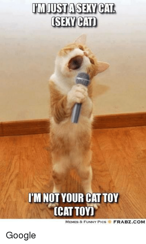 Cats, Funny, and Google: IMUUSTASEXY CAT  [SEXY CAT)  I'MNOT YOUR CATTOY  CAT TOY)  MEMES & FUNNY PICs  FRABZ.COM Google