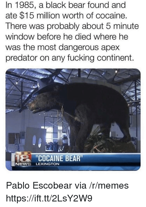 Fucking, Memes, and News: In 1985, a black bear found and  ate $15 million worth of cocaine.  There was probably about 5 minute  window before he died where he  was the most dangerous apex  predator on any fucking continent.  COCAINE BEAR  NEWS LEXINGTON Pablo Escobear via /r/memes https://ift.tt/2LsY2W9