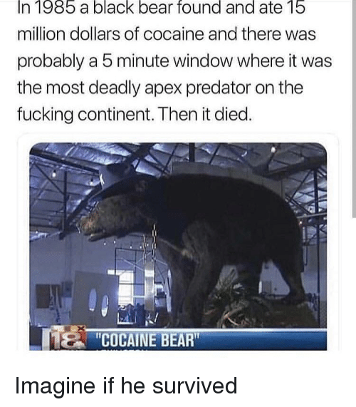 Fucking, Apex, and Bear: In 1985 a black bear found and ate 15  million dollars of cocaine and there was  probably a 5 minute window where it was  the most deadly apex predator on the  fucking continent. Then it died.  COCAINE BEAR