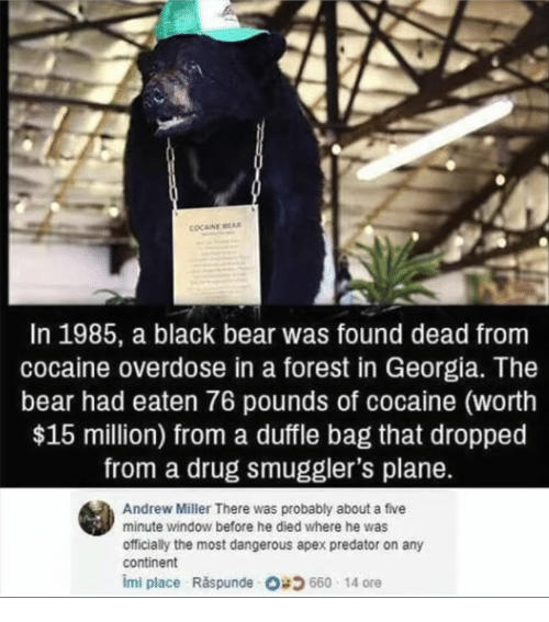 In 1985 a Black Bear Was Found Dead From Cocaine Overdose in a