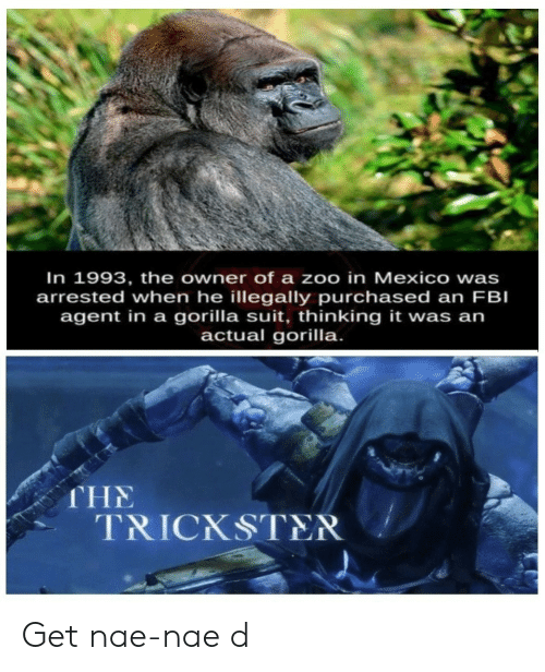 Fbi, Nae Nae, and Mexico: In 1993, the owner of a zoo in Mexico wa  arrested when he illegally purchased an FBI  agent in a gorilla suit, thinking it was an  actual gorilla.  s  THE  TRICKSTER Get nae-nae d