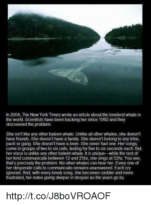 Loneliest Whale In The World