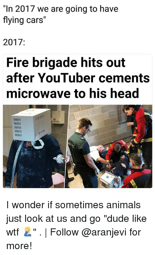 "Animals, Cars, and Dude: ""In 2017 we are going to have  flying cars""  2017:  Fire brigade hits out  after YouTuber cements  microwave to his head I wonder if sometimes animals just look at us and go ""dude like wtf 🤦🏼‍♂️"" . 