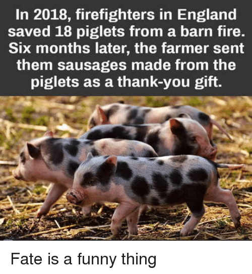 England, Fire, and Funny: In 2018, firefighters in England  saved 18 piglets from a barn fire.  Six months later, the farmer sent  them sausages made from the  piglets as a thank-you gift. Fate is a funny thing