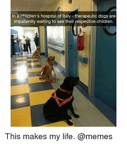 Children, Dogs, and Life: In a children's hospital of Italy therapeutic dogs are  impatiently waiting to see their respective children. This makes my life. @memes
