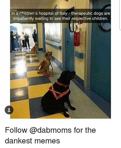 Children, Dogs, and Memes: In a children's hospital of Italy therapeutic dogs are  impatiently waiting to see their respective children. Follow @dabmoms for the dankest memes