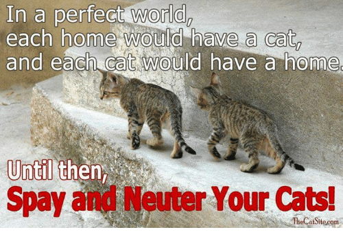 Cats, Memes, and Home: In a perfect world  each home would have a cat  and each CaC would have a home  Until  Spay and Neuter Your Cats!