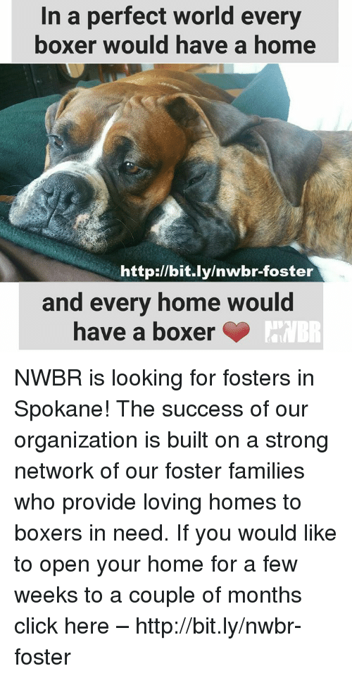 Click, Memes, and Boxer: In a perfect world every  boxer would have a ho  me  http://bit.ly/nwbr-foster  and every home would  have a boxer NWBR is looking for fosters in Spokane!  The success of our organization is built on a strong network of our foster families who provide loving homes to boxers in need.  If you would like to open your home for a few weeks to a couple of months click here – http://bit.ly/nwbr-foster