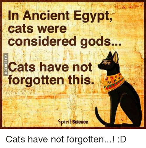 in ancient egypt cats were considered gods cats have not 7063702 ✅ 25 best memes about ancient egypt ancient egypt memes