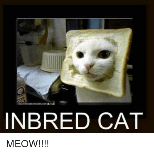 in bred cat meow meme on me me