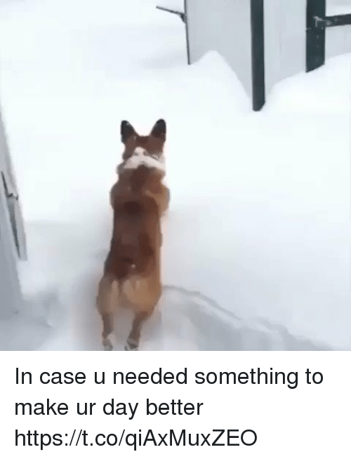 Case, Day, and Make: In case u needed something to make ur day better https://t.co/qiAxMuxZEO