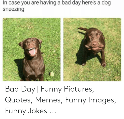 In Case You Are Having a Bad Day Here\'s a Dog Sneezing Bad ...