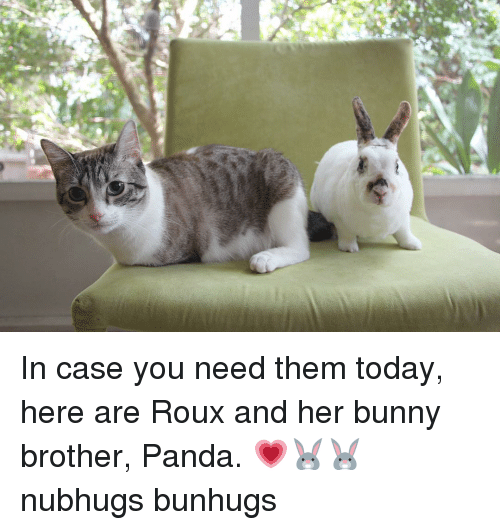 Bunnies, Memes, and Panda: In case you need them today, here are Roux and her bunny brother, Panda. 💗🐰🐰 nubhugs bunhugs