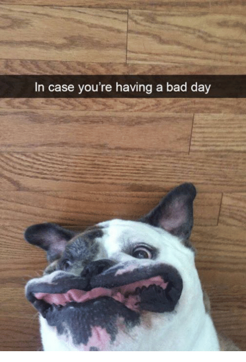Funny Memes For Having A Bad Day : In case you re having a bad day meme on me
