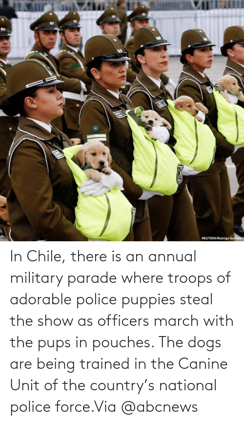 Dogs, Instagram, and Police: In Chile, there is an annual military parade where troops of adorable police puppies steal the show as officers march with the pups in pouches. The dogs are being trained in the Canine Unit of the country's national police force.Via @abcnews