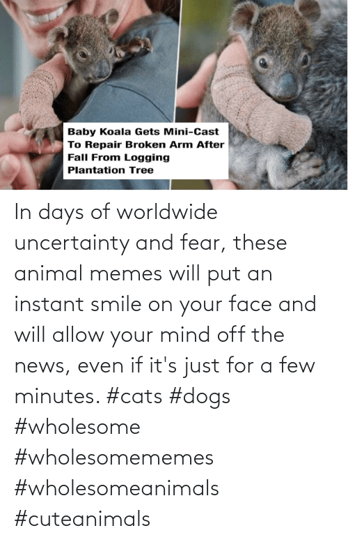Cats, Dogs, and Memes: In days of worldwide uncertainty and fear, these animal memes will put an instant smile on your face and will allow your mind off the news, even if it's just for a few minutes. #cats #dogs #wholesome #wholesomememes #wholesomeanimals #cuteanimals