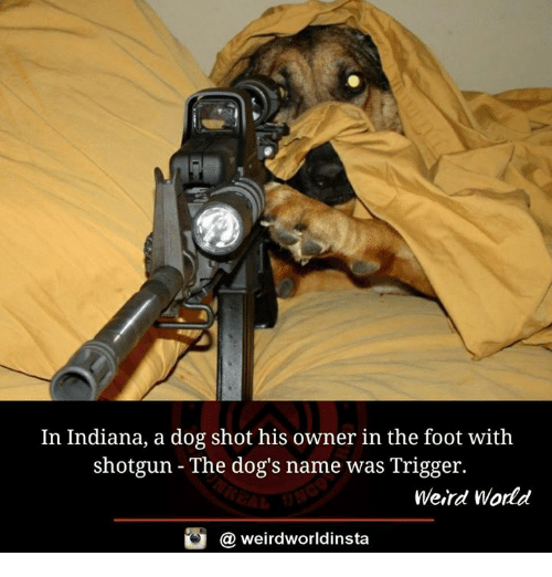 Dogs, Memes, and Weird: In Indiana, a dog shot his owner in the foot with  shotgun The dog's name was Trigger.  Weird World  weirdworldinsta  a