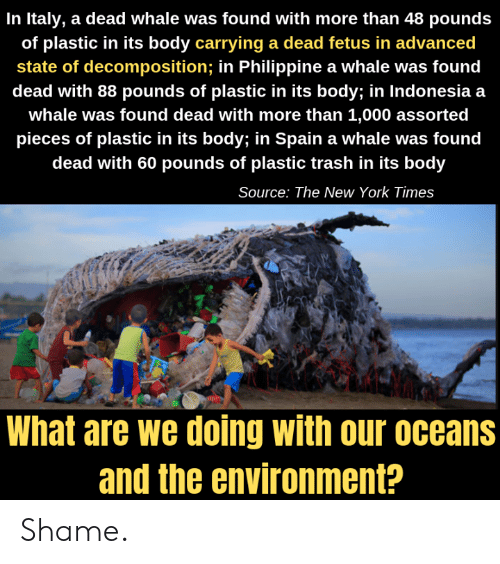 Memes, New York, and Trash: In Italy, a dead whale was found with more than 48 pounds  of plastic in its body carrying a dead fetus in advanced  state of decomposition; in Philippine a whale was found  dead with 88 pounds of plastic in its body; in Indonesia a  whale was found dead with more than 1,000 assorted  pieces of plastic in its body; in Spain a whale was found  dead with 60 pounds of plastic trash in its body  Source: The New York Times  What are we doing with our oceans  and the environment? Shame.