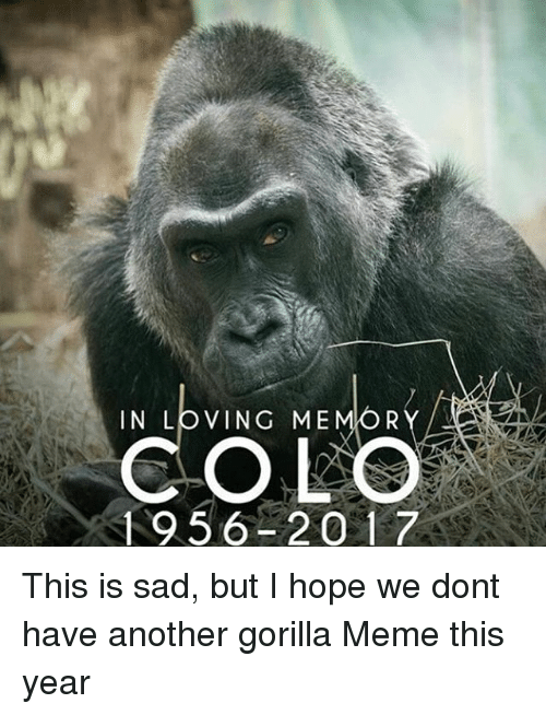 in loving me r colo 1956 2017 this is sad 12344531 25 best gorilla meme memes dog and cats memes, chewing memes