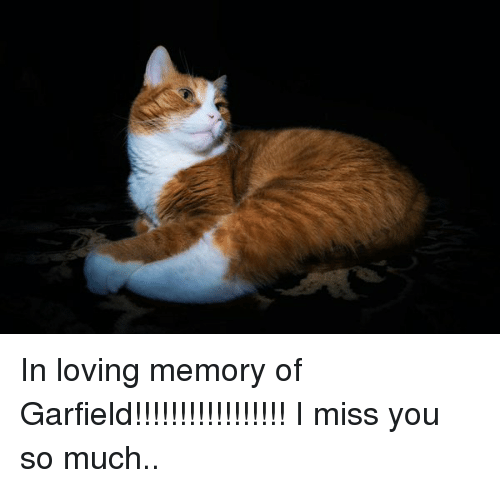 In Loving Memory Of Garfield I Miss You So Much