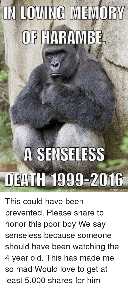 f258e08d9 Love, Memes, and Death: IN LOVING MEMORY OF HARAMBE A SENSELESS DEATH 1999