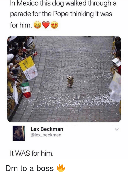 Memes, Pope Francis, and Mexico: In Mexico this dog walked through a  parade for the Pope thinking it was  for him.  Lex Beckman  @lex_beckman  It WAS for him Dm to a boss 🔥