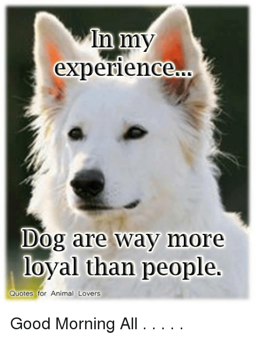 in my experience dog are way more loyal than people quotes for animal lovers good morning all