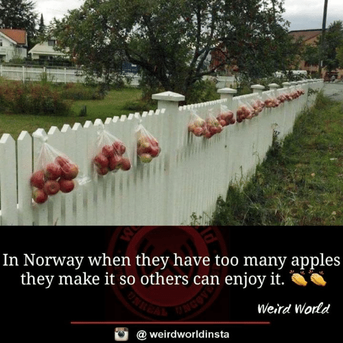 Memes, Weird, and Norway: In Norway when they have too many apples  they make it so others can enjoy it.  Weird Wodd  @ weirdworldinsta