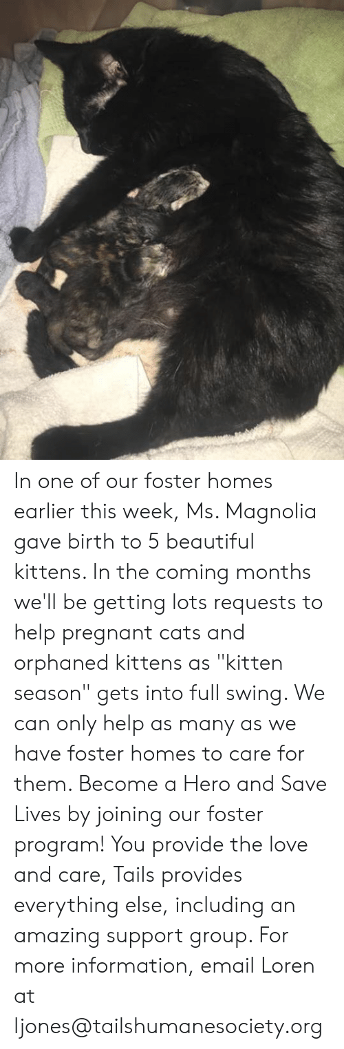 """Beautiful, Cats, and Love: In one of our foster homes earlier this week, Ms. Magnolia gave birth to 5 beautiful kittens. In the coming months we'll be getting lots requests to help pregnant cats and orphaned kittens as """"kitten season"""" gets into full swing. We can only help as many as we have foster homes to care for them. Become a Hero and Save Lives by joining our foster program! You provide the love and care, Tails provides everything else, including an amazing support group. For more information, email Loren at ljones@tailshumanesociety.org"""
