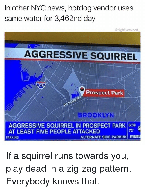 Memes, News, and Brooklyn: In other NYC news, hotdog vendor uses  same water for 3,462nd day  @highfiveexpert  AGGRESSIVE SQUIRREL  278  Prospect Park  BROOKLYN  AGGRESSIVE SQUIRREL IN PROSPECT PARK 6:38  AT LEAST FIVE PEOPLE ATTACKED  72°  PARKING  ALTERNATE SIDE PARKINC EYEWITI If a squirrel runs towards you, play dead in a zig-zag pattern. Everybody knows that.