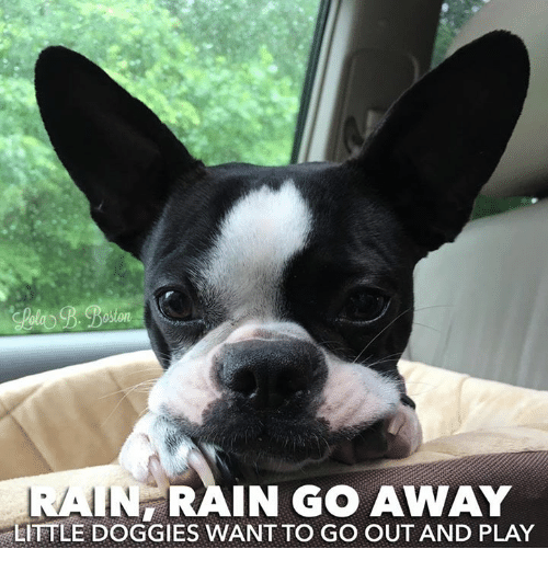 in rain go away little doggies want to go out 23579296 in rain go away little doggies want to go out and play meme on me me