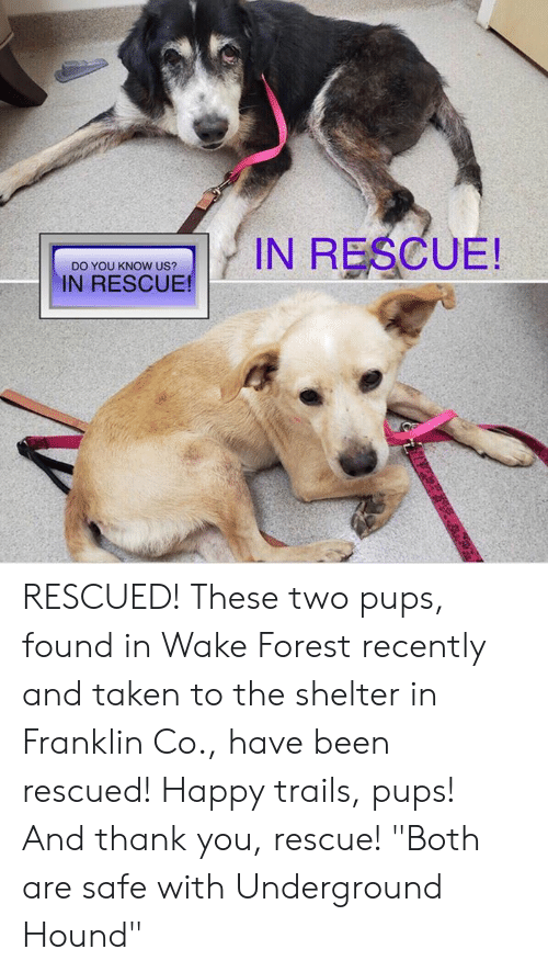 """Memes, Taken, and Thank You: IN RESCUE!  DO YOU KNOW US?  IN RESCUE! RESCUED!  These two pups, found in Wake Forest recently and taken to the shelter in Franklin Co., have been rescued! Happy trails, pups! And thank you, rescue!  """"Both are safe with Underground Hound"""""""