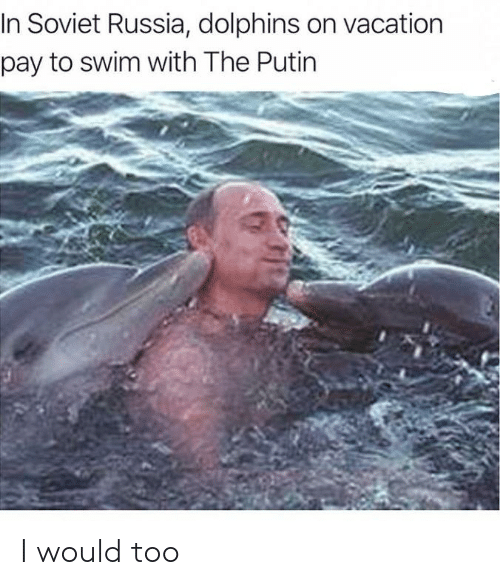 Reddit, Dolphins, and Putin: In Soviet Russia, dolphins on vacation  pay to swim with The Putin I would too