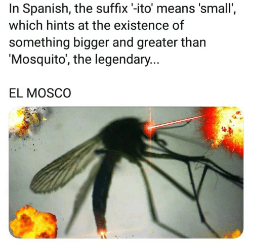 In Spanish the Suffix '-Ito' Means 'Small' Which Hints at