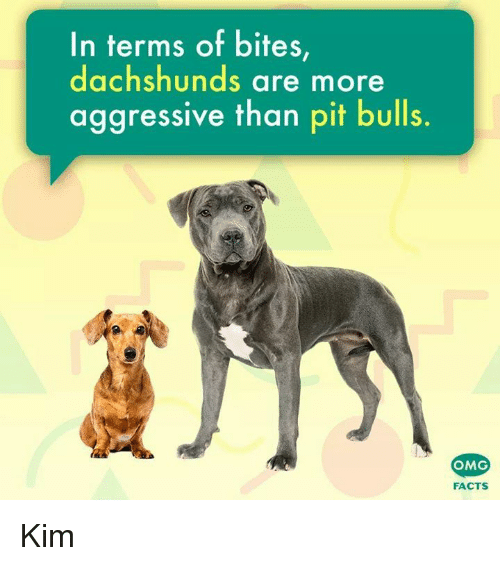 Facts, Memes, and Omg: In terms of bites  dachshunds are more  aggressive than pit bulls  OMG  FACTS Kim