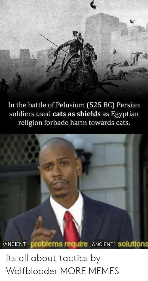 Cats, Dank, and Memes: In the battle of Pelusium (525 BC) Persian  soldiers used cats as shields as Egyptian  religion forbade harm towards cats.  ANCIENT problems require ANCIENT solutions Its all about tactics by Wolfblooder MORE MEMES